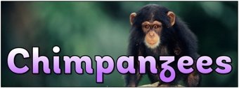 Chimpanzees Banner