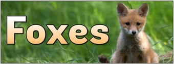 Foxes Banner