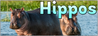 Hippos Banner