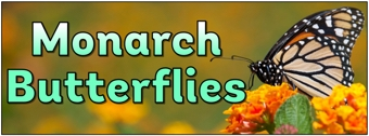 Monarch Butterflies Banner