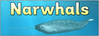 Narwhals Banner