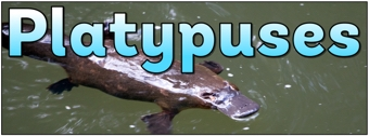 Platypuses Banner