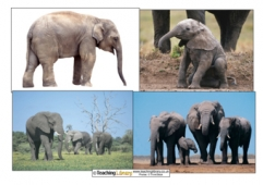 Elephant Photos
