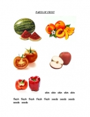Parts of Fruit