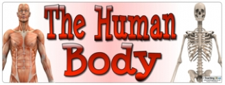 The Human Body Banner