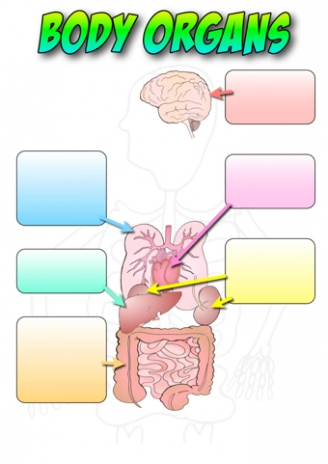 Body Organs Labelling Activity