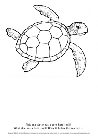 colour the turtle