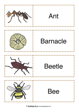 Minibeasts Labels