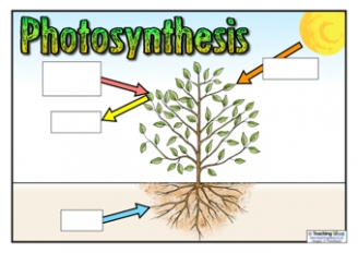Photosynthesis Worksheet For Kids - photosynthesis equation ...