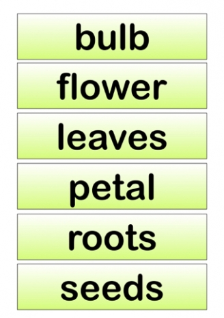 Plants Vocabulary Labels
