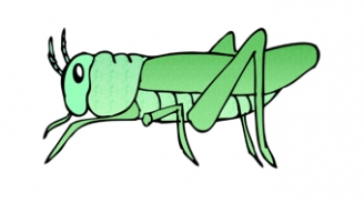 Grasshopper Display Picture