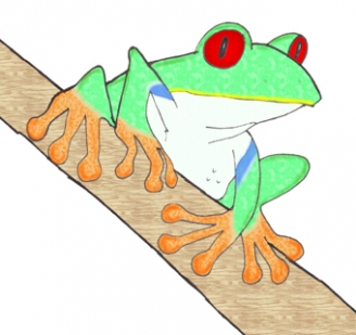 Red-Eyed Tree Frog Display Picture