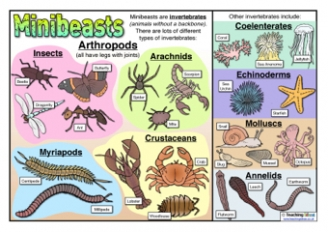 Types of Minibeasts