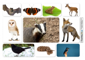 Woodland Animals Resources