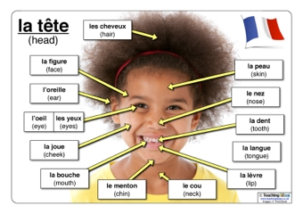 French The Head on Blank Vocabulary Worksheet Template