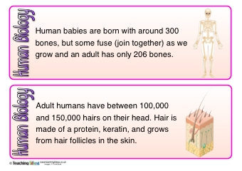 Human Biology Fact Cards