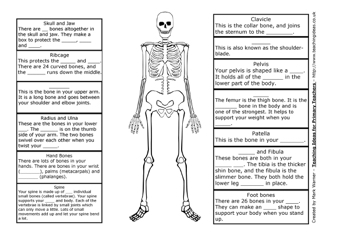 the skeleton | teaching ideas, Skeleton