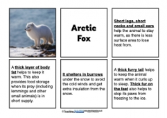 Animal Adaptations Matching Activity