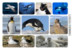 Antarctic Animals Collage