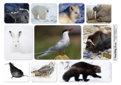 Arctic Animals Collage