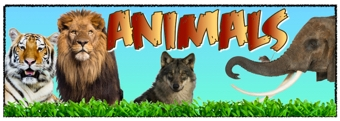 Image result for animals banner