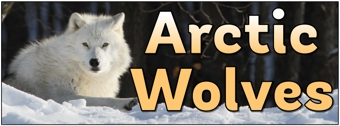 Arctic Wolves Banner