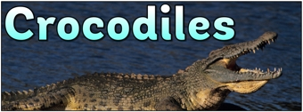 Crocodiles Banner