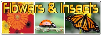 Flowers and Insects Banner