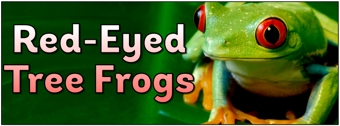 Red-Eyed Tree Frogs Banner