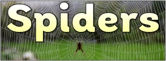 Spiders Banner