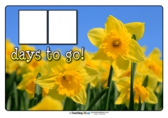Countdown to St. David's Day Poster