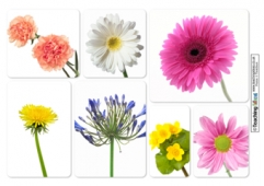Flowers Photo Collages
