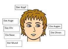 Label the Face in German