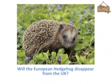 Helping Hedgehogs