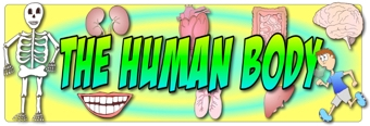 The Human Body Banner 2