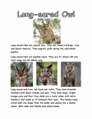 Long-Eared Owl Facts