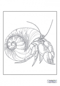 Mindfulness Colouring - Hermit Crab