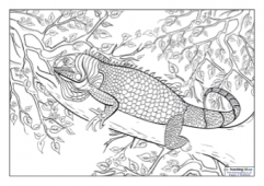 Mindfulness Colouring - Iguana