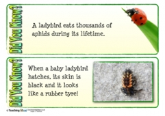 MInibeasts Fact Cards