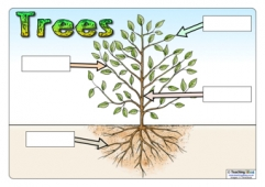Parts of a Tree Posters