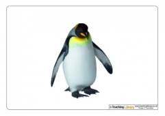 Penguin Picture