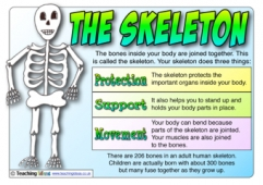 The Skeleton Poster