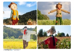 Scarecrow Photos
