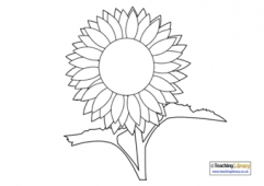 Sunflower Colouring Page