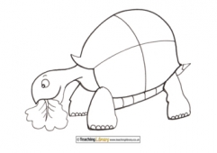 Tortoise Colouring Page 2