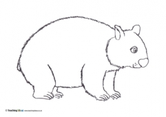 Wombat Colouring Picture Coloring Page