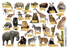 Zoo Animals Word Mat