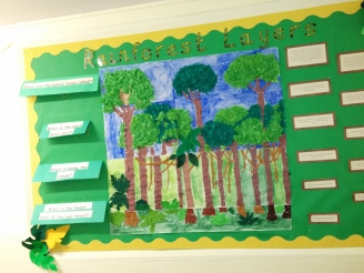 Rainforest Layers Display