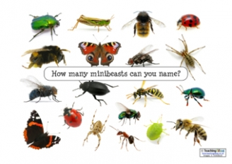 Minibeasts Inspiration Posters