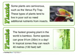 Plants Fact Cards